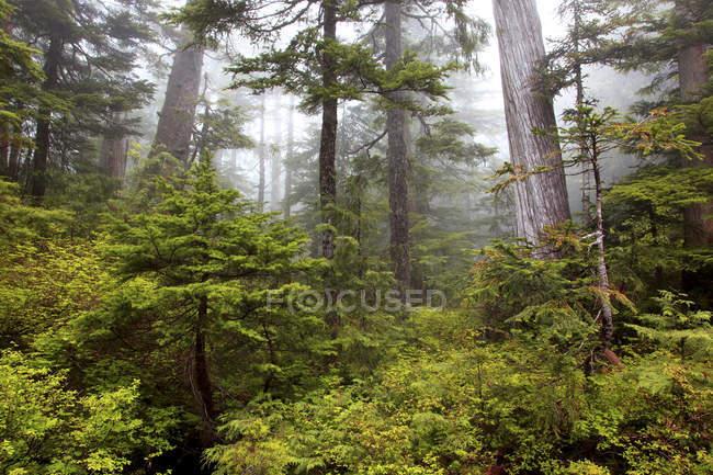 Vieille forêt de Spipyus Provincial Park, péninsule Sechelt, Sunshine Coast, Canada — Photo de stock