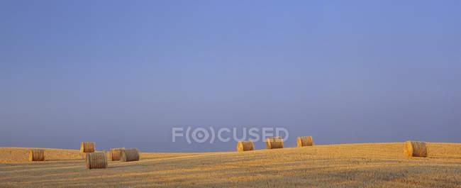 Fardos redondos em campo perto de Cochrane, Alberta, Canadá . — Fotografia de Stock