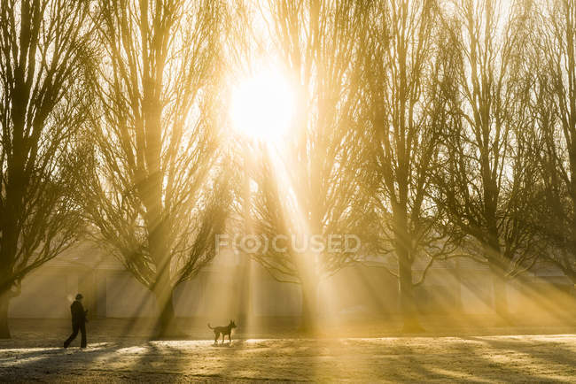 Woman walking dog in fog at sunrise, John Hendry Park, Vancouver, British Columbia, Canada — Stock Photo