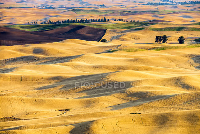 Rolling hills at sunset in Palouse, Washington State, USA. — Stock Photo