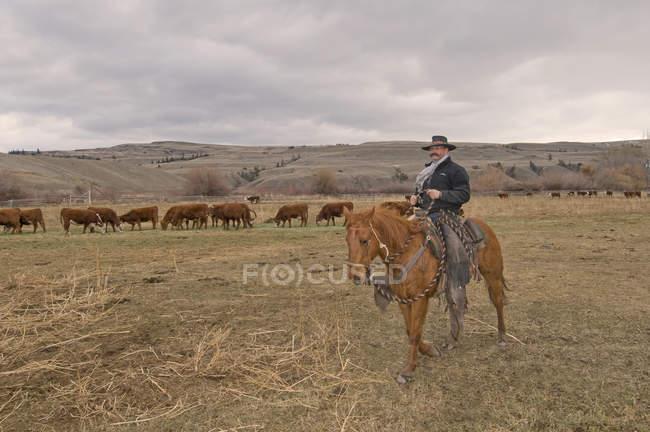 Cowboy em cavalo observando rebanho de vacas no rancho perto de Merritt, Colúmbia Britânica, Canadá — Fotografia de Stock