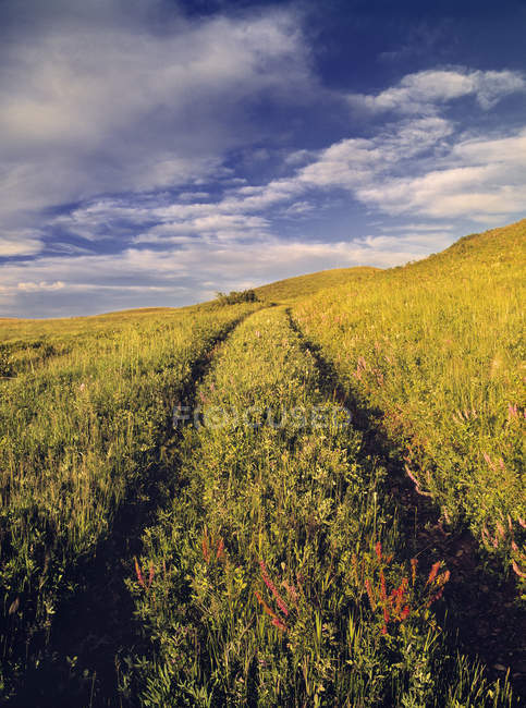 Truck Trail through pastureland of Cypress Hills, Saskatchewan, Canada — Stock Photo