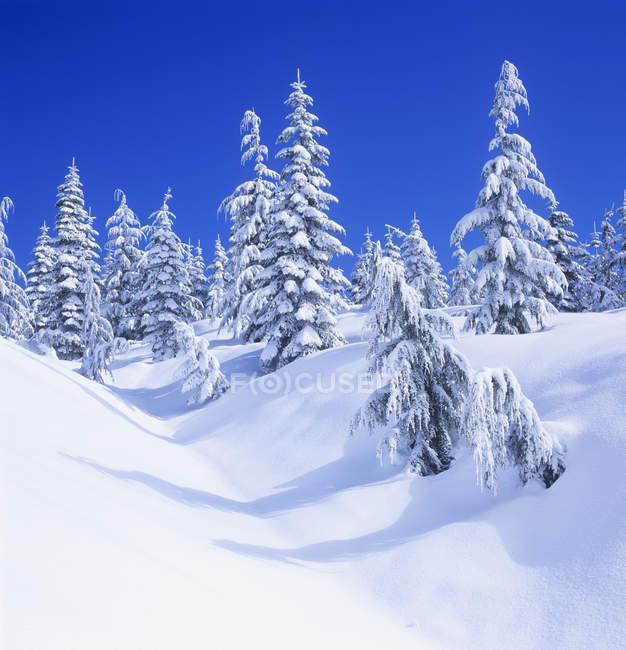Fresh snow on Mount Elphinstone, Gibsons, British Columbia, Canada. — Stock Photo