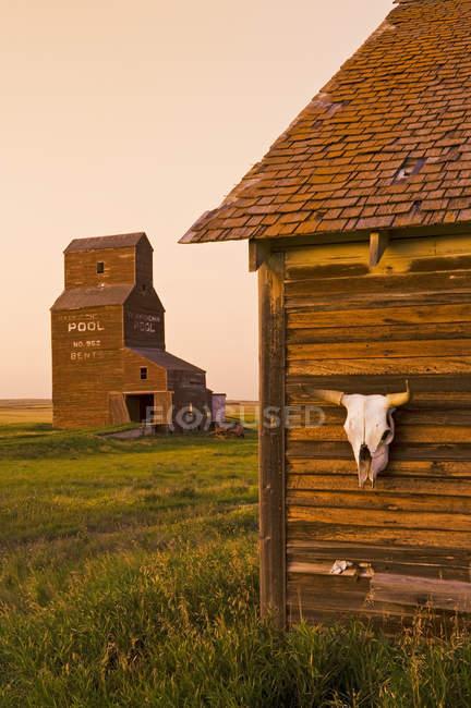 Primo piano del cranio di mucca sulla vecchia casa con ascensore a grano nella città fantasma di Bents, Saskatchewan, Canada — Foto stock