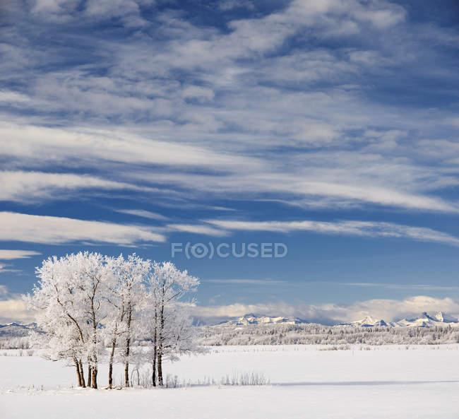 Hoarfrost on trees, Horse Creek Road near Cochrane, Alberta, Canada. — Stock Photo