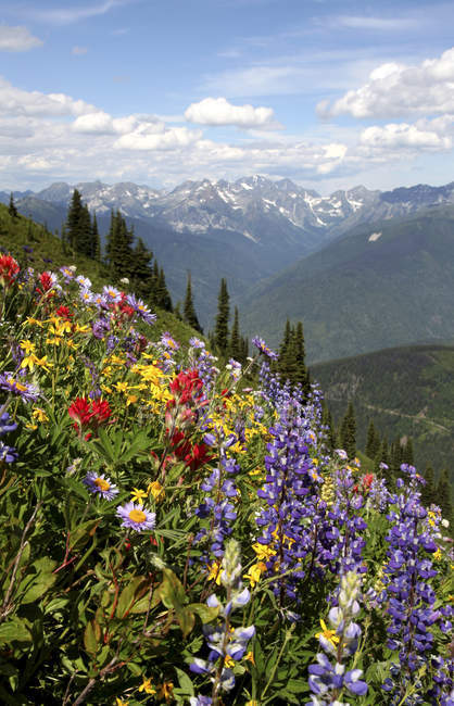 Piste montagneuse des fleurs sauvages du pic Idaho, New Denver, Colombie-Britannique, Canada — Photo de stock