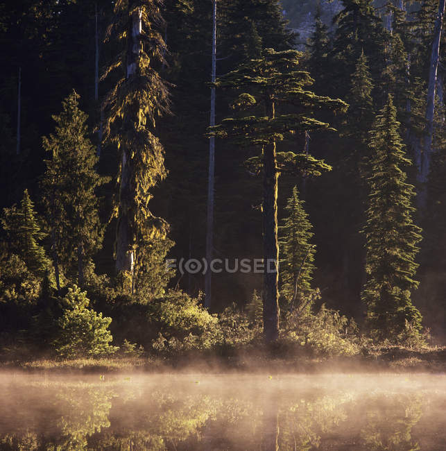 Névoa da manhã no lago em Caren Range, Colúmbia Britânica, Canadá . — Fotografia de Stock