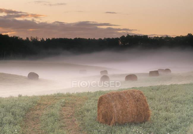 Круглые тюки сена в поле во время туманного восхода солнца возле Саскатуна, Саскачеван, Канада — стоковое фото