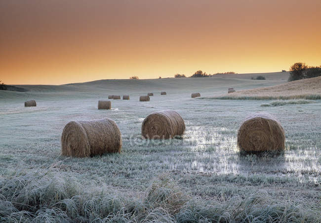 Round hay bales on frosty meadow near Holland, Manitoba, Canada — Stock Photo