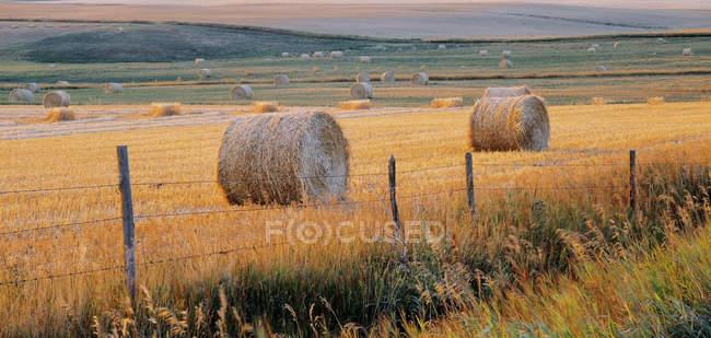 Круглые тюки за забором на лугу возле Водной долины, Альберта, Канада . — стоковое фото