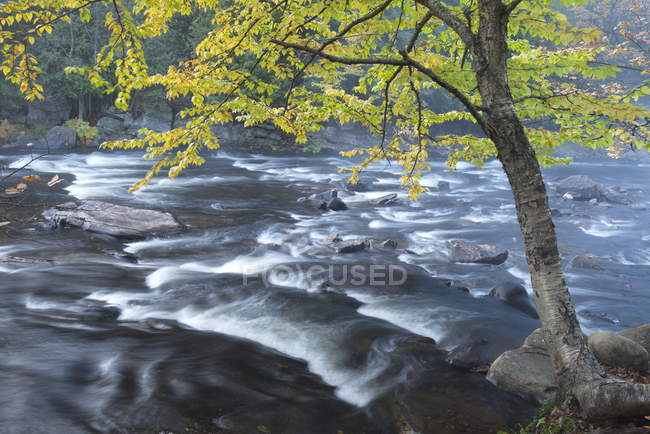 Autumnal scene on Oxtonge River, Muskoka, Ontario, Canada — Stock Photo
