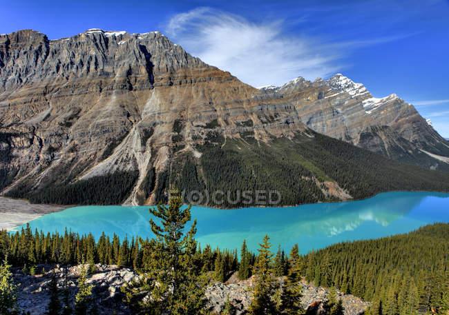 Vista aérea da floresta de coníferas e montanhas por Peyto Lake, Parque Nacional de Banff, Alberta, Canadá — Fotografia de Stock