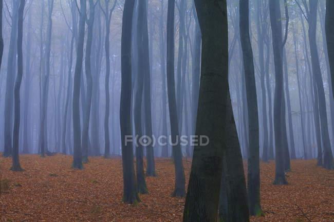 Forest in fog in autumn near Frankfurt, Germany — Stock Photo