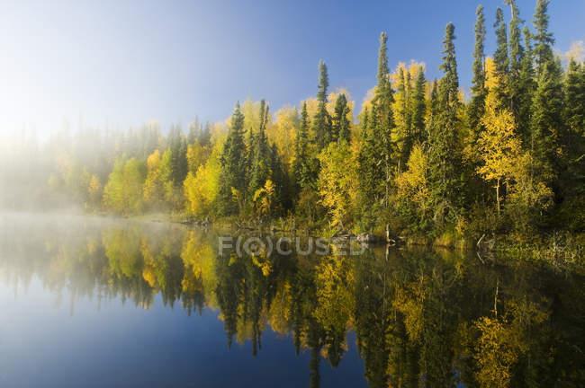 Осенняя листва лесных деревьев, озеро Диккенс, Северный Саскачеван, Канада — стоковое фото