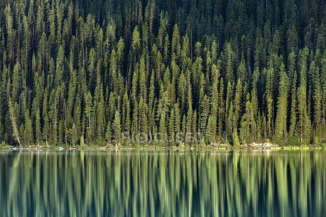 Вечнозеленые деревья отражение в озеро Луиза, Национальный парк Банф, Альберта, Канада — стоковое фото