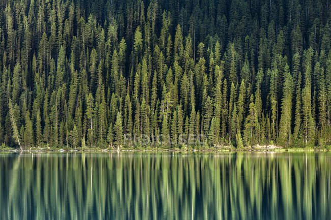 Immergrüne Bäume Reflexion in Lake Louise, Banff Nationalpark, Alberta, Kanada — Stockfoto