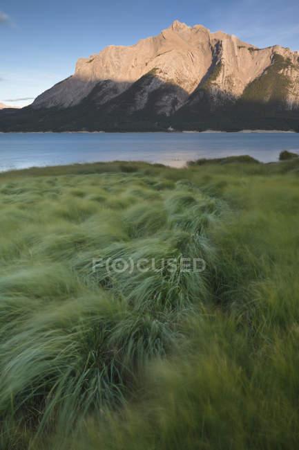 Green grass on shore of Abraham Lake at Batus Camp, Kootenay Plains, Alberta, Canada — стокове фото