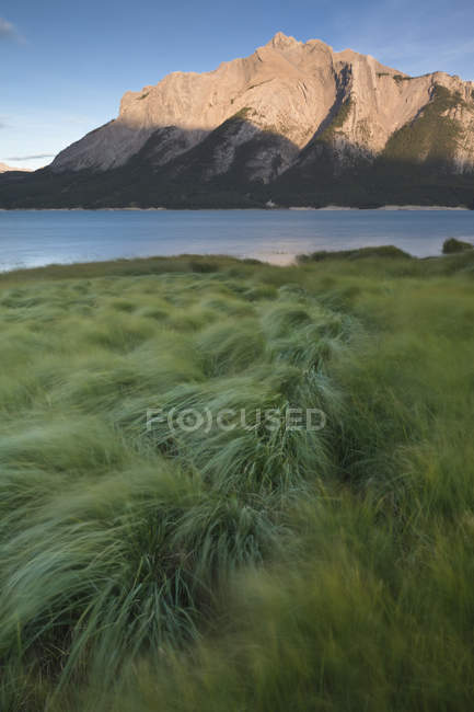 Grünes Gras am Ufer des Abraham Lake im Batus Camp, Kootenay Plains, Alabama, Kanada — Stockfoto