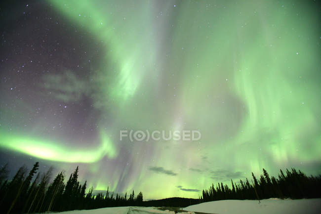 Aurora borealis over snow covered forest in Yukon, Canada. — Stock Photo