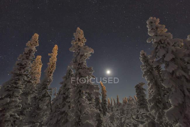 Arbres couverts de neige et le ciel clair de lune dans le nord du Yukon — Photo de stock