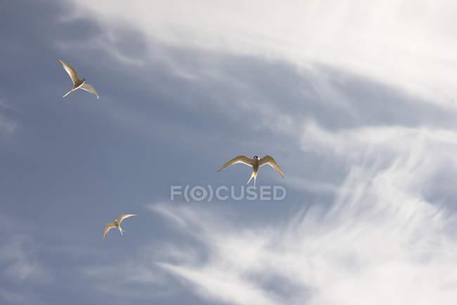 Sterne volano in cielo blu nuvoloso, punto di vista elevato — Foto stock