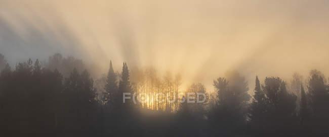 Sun shining through fog behind trees of Algonquin Park, Ontario, Canada. — Stock Photo