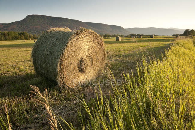 Hay bales in field at Peace country, British Columbia, Canada — Stock Photo