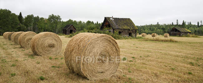 Засеянное сено со старыми деревенскими зданиями в Карибу, Британская Колумбия, Канада — стоковое фото