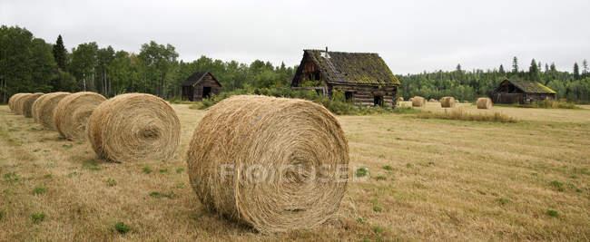 Geerntete Heu-Feld mit rustikalen Altbau im Cariboo, British Columbia, Canada — Stockfoto