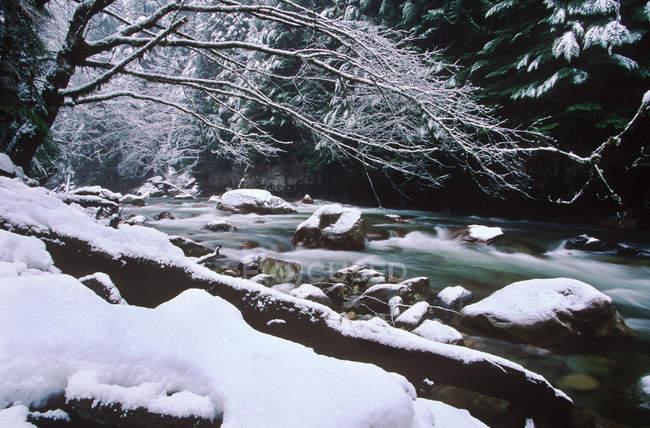 Tamahi creek, che scorre da Cascade range, in inverno, Columbia britannica, Canada. — Foto stock
