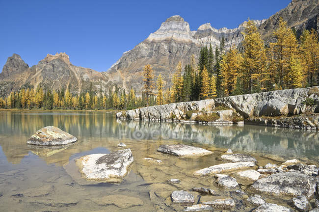 Autumnal trees reflecting in water on Opabin Plateau, Yoho National Park, British Columbia, Canada — Stock Photo