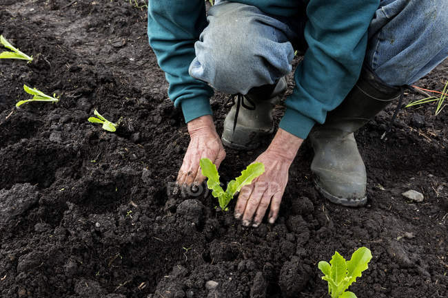 Cropped view of man gardening and planting seedlings — Stock Photo