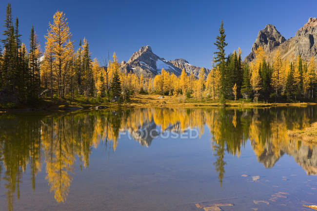 Autumnal forest and lake in Opabin Plateau, Yoho National Park, British Columbia, Canada — Stock Photo