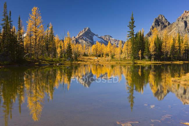Floresta outonal e lago no planalto de Opabin, Parque Nacional de Yoho, Colúmbia Britânica, Canadá — Fotografia de Stock