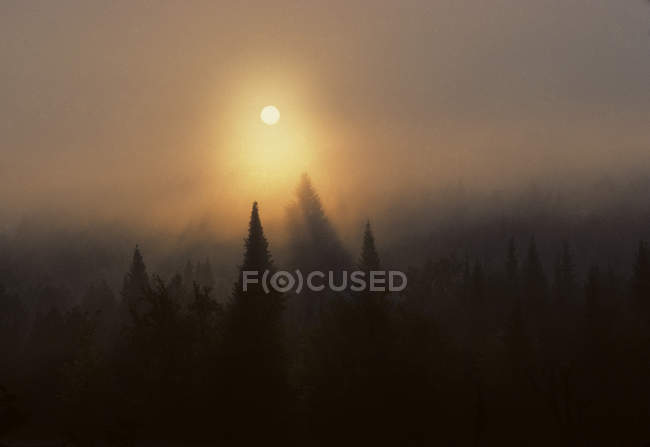 Scenic landscape with forest covered with thick fog with sun rising above trees, Ontario, Canada. — Stock Photo