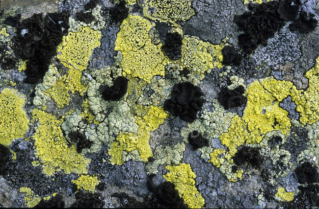 Close-up of natural pattern of lichen-encrusted rock, full frame — Stock Photo