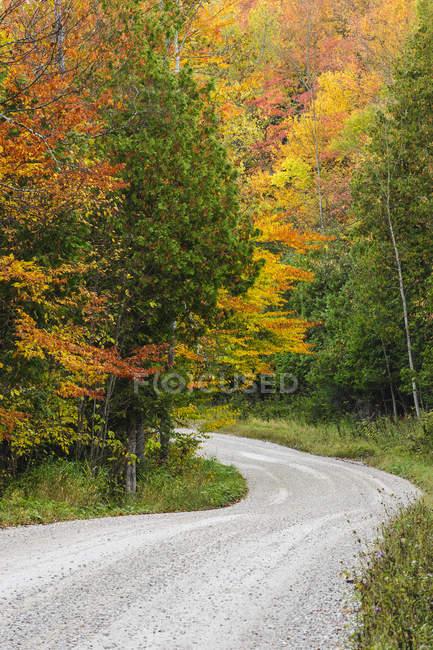 Estrada de baixo vale pela floresta outonal em Beaver Valley, Ontário, Canadá — Fotografia de Stock