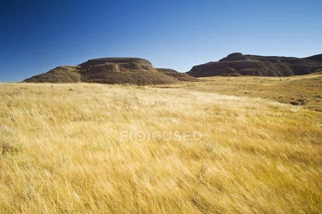Wind-blown prairie grasses and rocks in bright sunlight, Grasslands National Park — Stock Photo