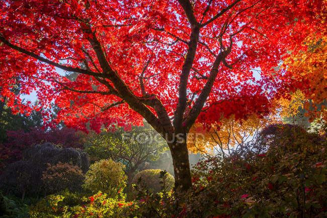 Fogliame autunnale nel giardino giapponese, Butchart Gardens, Brentwood Bay, Columbia Britannica, Canada — Foto stock