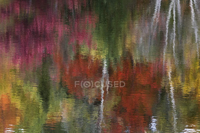 Abstract reflection of autumn foliage near Labelle, Quebec. — Stock Photo