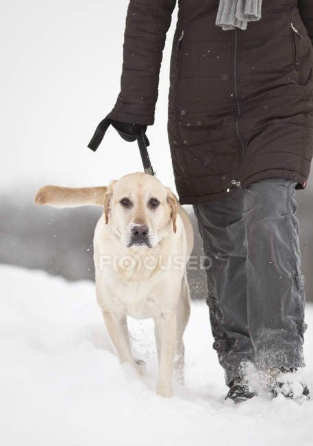 Cropped view of woman walking dog on snowy winter field. — Photo de stock
