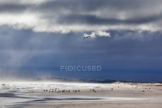 Dark clouds with mist and seagulls on beach at Prince Edward Island National Park, Prince Edward Island, Canada — Stock Photo