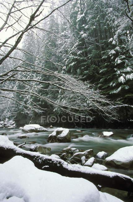 Tamahi creek, che scorre da Cascade range, Columbia britannica, Canada. — Foto stock