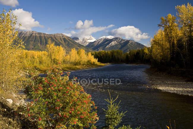 Elk River y la montaña Three Sisters en otoño, Fernie, Canadá . - foto de stock