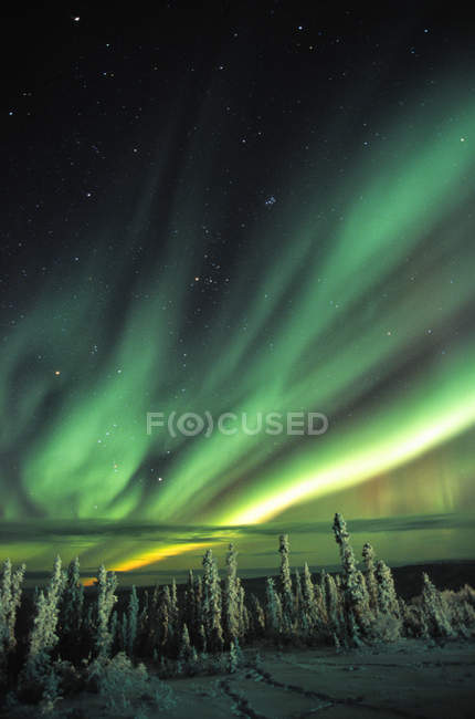 Aurora borealis over snow covered tree tops in Yukon, Canada. — Stock Photo