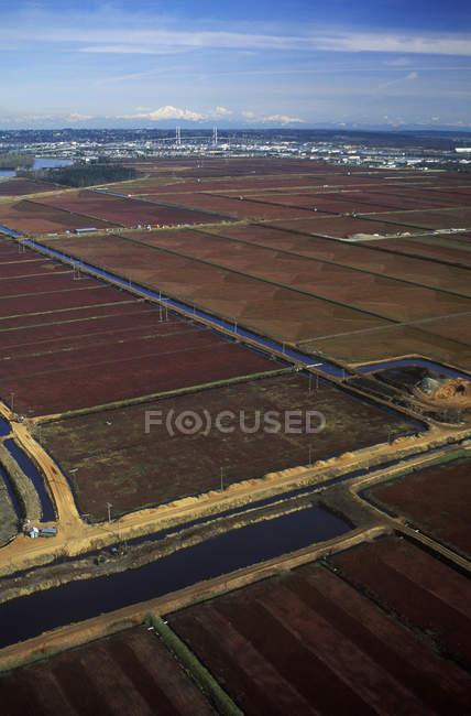 Vista aérea de fazendas de cranberry em Fraser Valley, British Columbia, Canadá . — Fotografia de Stock