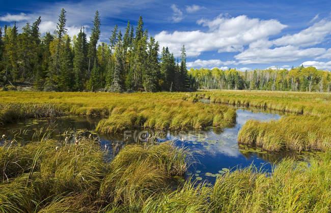 Травянистые болота вблизи Сиу Нарроус, Северо-Западной Онтарио, Канада — стоковое фото