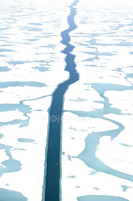 Crack nell'Oceano Artico ghiacciato con eiders comuni che scorrono nell'acqua, Nunavut, Canada . — Foto stock