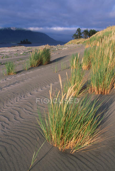 Whaler Island sand dunes and coastal grass, Clayoquot Sound, Vancouver Island, British Columbia, Canada. — Stock Photo