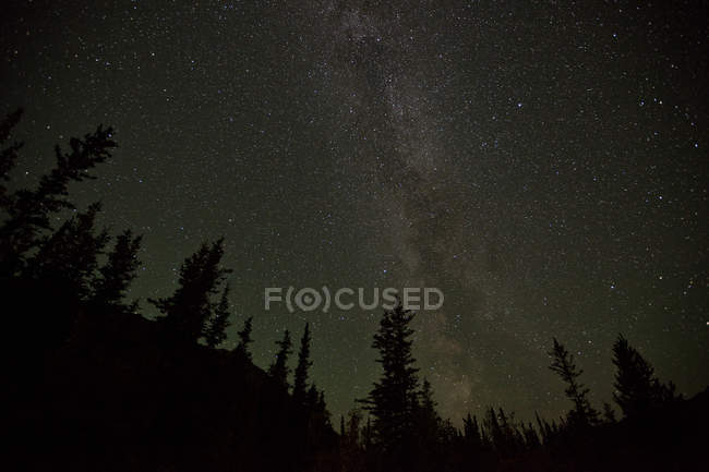 Milky way over trees silhouettes in woods of Yukon, Canada. — Photo de stock
